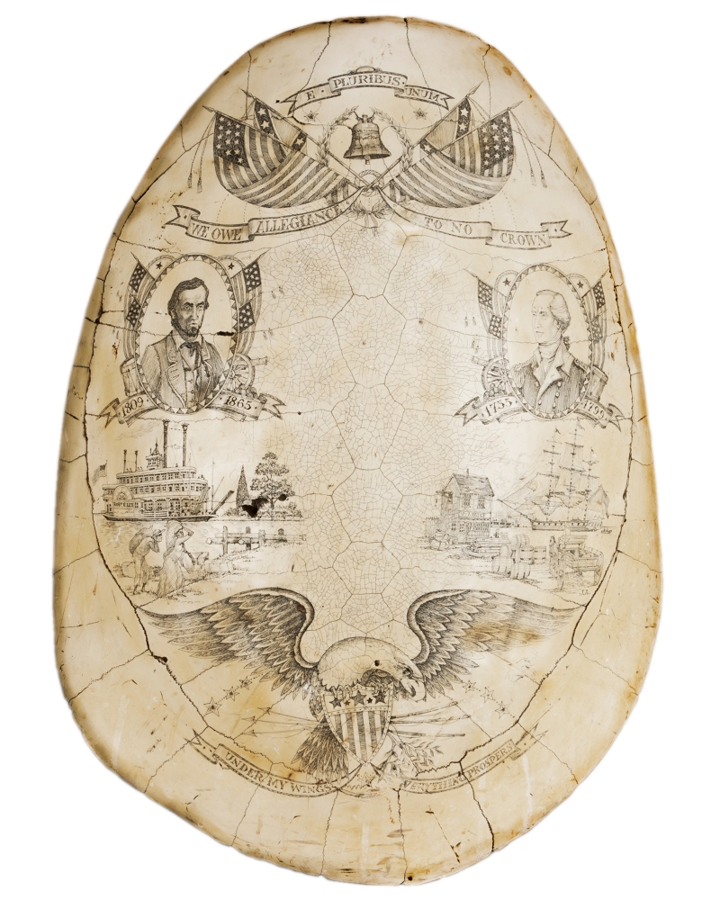 Replica scrimshaw blonde turtle shell